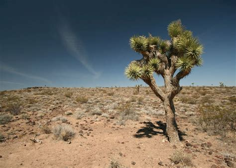 Visit Death Valley National Park, California | Audley Travel