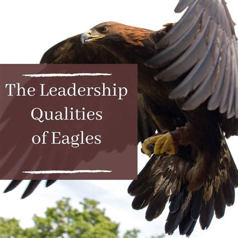 5 Positive Leadership Traits People Can Learn From Eagles