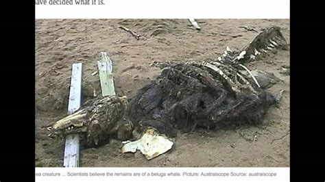 Mystery ocean creature skeleton found on beach in Russia