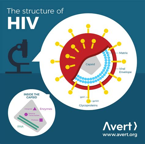 The structure of HIV | Avert