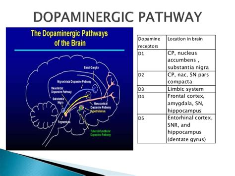 Epileptogenesis and drugs with mechaism