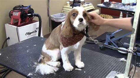 Gatsby Gets Groomed at Dogma   Best of Main Line   Dog