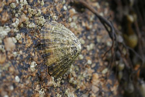 Limpet l Unbelievably Powerful Grip - Our Breathing Planet